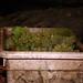2012 Cal Plans Woods Chardonnay Harvest 0008