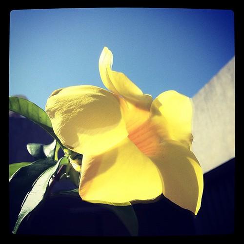 [Foto] Flor amarela sorrindo para o sol