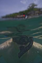 DSC09509 (andrewlorenzlong) Tags: fish swimming swim thailand snorkel andrew snorkeling kohchang kohrang kohrangyai korangyai