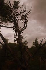 L'arbre ténébreux (NovaDroid) Tags: arbre ténébreux