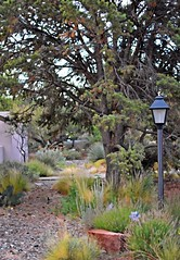 Desert Foliage Scape (Jo Zimny) Tags: theflickrlounge wk30 scapes neighboursyard trees rocks lamp path