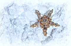 Fallen star . . . (JLS Photography - Alaska) Tags: macromondays macroshot macro star stars jlsphotographyalaska whitebackground outdoor