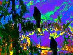 two blackbirds sitting in a tree (Sonja Parfitt) Tags: test manipulated layered sky bright yellow blue tree birds