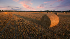 Glorious Morning (artursomerset) Tags: straw bales hay field harvest somerset england morning sun light