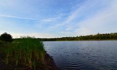 Lepper Brook Dam (TheNovaScotian1991) Tags: lepperbrook dam lake reeds sky morning reflection nikond3200 tokina1116mmdxii water 1116mm victoriapark canada novascotia truro colchestercounty trees shore