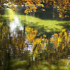 Jardin public (Gerard Hermand) Tags: 1609064269 gerardhermand france bordeaux canon eos5dmarkii formatcarr jardinpublic eau water rflexion reflection arbre tree