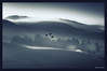 Three Amigos (Kevin_Jeffries) Tags: geese flight mist fog haze hill light rural nikon newzealand mono monotone monochrome d90 nature blackandwhite threeamigos birdlife bird flightpath art artistic tones shadows goldcollection bw