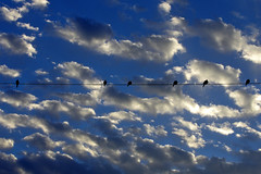 Clouds and doves at sunrise. (cbrozek21) Tags: clouds sky sunrise birdsonwire doves fantasticnature