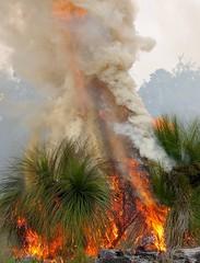K52S5841cs (Ben D'Acunto) Tags: burnoff bushfires pentax pentaxk5iis
