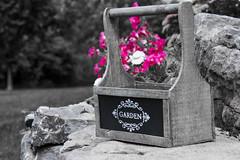 7 September 2016 (runningman1958) Tags: 365 365dayproject nikon d7200 nikond7200 desaturation garden basket