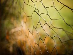 Dont shoot what it looks like, shoot what it feels like (David Alan Harvey) (Peter Jaspers) Tags: frompeterj 2016 olympus zuiko omd em10 1240mm28 tafelbergheide hff fence fenced happyfencefriday dof bokeh light green blaricum hike gooi gooisnatuurreservaat heide moor wire wiremesh chickenwire