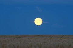 September Moon (C-Dals) Tags: sky moon evening nikon alberta nikkor prairies harvestmoon 70300mmf4556gvr d5100