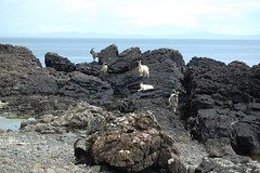 Carsaig Arches Hike, 40 (monika & manfred) Tags: uk nature scotland hiking gb isleofmull mm southcoast cliffhike coastalhike carsaigarches scotland2012