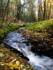 Trickler (Aaron Springer) Tags: autumn trees fall water leaves creek landscape waterfall stream fallcolor michigan fallfoliage motionblur northernmichigan mantonmi