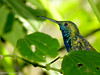 Beija Flor (Marney Queiroz) Tags: parque cores do flor aves borboleta das cor foz iguacu arara queiroz beija marney panasonicfz35 marneyqueiroz
