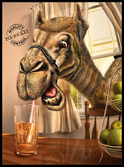 THIRSTY CAMEL (The PIX-JOCKEY (visual fantasist)) Tags: apple window photoshop tea drink room joke contest fake humour camel fantasy photomontage chop thirst fotomontaggi robertorizzato pixjockey