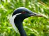 Olhos vermelhos... (Marney Queiroz) Tags: nature brasil cores do natureza parana ceu foz iguacu queiroz marney panasonicfz35 marneyqueiroz