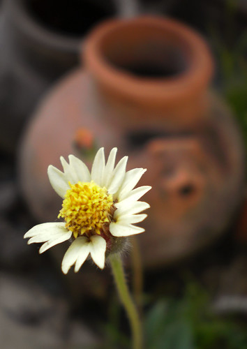 Flower & pot