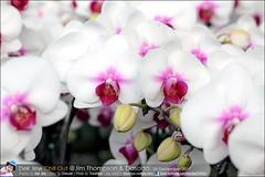 1Day-trip-Jim-Thompson-Farm&Dasada-Gallery_E12663461-047