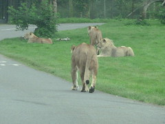 """Longleat Safari Park • <a style=""""font-size:0.8em;"""" href=""""http://www.flickr.com/photos/81195048@N05/8017652994/"""" target=""""_blank"""">View on Flickr</a>"""