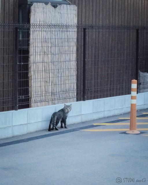 Today's Cat@2012-09-25