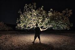 figueira atómica . atomic fig tree (António Alfarroba) Tags: silhouette night self flash algarve figtree figueira silhueta
