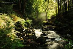 Reverence (Suddhajit) Tags: autumn morninglight ballaglassglen gloriouslight bwcpl canon5dmkii 1740llens suddhajitsen pursuitoflight