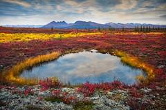 Alaska - Denali Regional Park (Luke Austin) Tags: color fall alaska landscape denali