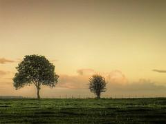 Softly (Eric Goncalves) Tags: autumn trees sunset sky color green nature beautiful clouds forest landscape soft dean gloucestershire sunsetting array forestofdean thegalaxy bestcapturesaoi ericgoncalves elitegalleryaoi