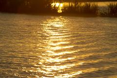 20120908-_DSC8193 (Fomal Haut) Tags: africa zimbabwe  zambeziriver