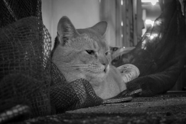 Today's Cat@2012-10-04