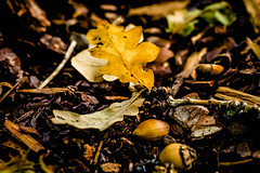 October 06, 2012 (La Flaf) Tags: autumn leaves pad acorn artichoke 2012 publunch croxleygreen