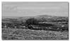Mono Carn (Simon Bone Photography) Tags: blackandwhite landscape mono cornwall view cornish canoneos30d windswepttree carnmarth wwwthehidawaycouk canonef24105mmlf4