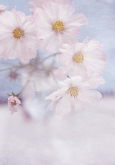 Pretty (borealnz) Tags: pink flowers texture pretty bunch arrangement cosmos