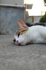 (Ommie )Please ... (acutexiaolin) Tags: animal cat sh cn