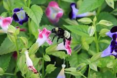 Mercer Arboretum and Botanic Gardens (im2fast4u2c) Tags: bee mercer arboretum botanic gardens