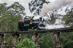 Light Loco (Dobpics O'Brien) Tags: pbr puffingbilly pbps 1694 climax train trestle bridge belgrave steam victorian victoria rail railway railways engine locomotive