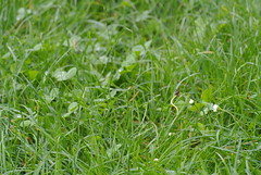 DSC_3428 (mavnjess) Tags: 15 june 2016 vicenza italy italia coniglio coniglios rabbit rabbits bunny bunnies