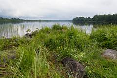 Joyful day (Jukka M.) Tags: finland parkano summer lake green plants flowers sunny joyful