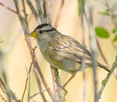 Cool Shade. (Omygodtom) Tags: outdoors bird wild wildlife abstract animalplanet birds natural nikon d7100 nikon70300mmvrlens flickr pond