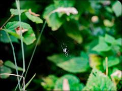 Spider (adolgov) Tags: california mendocino ocean pacificcoasthighway pch pacificocean