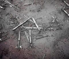 AdobePhotoshopExpress_538743c4b58c4c9987f67a359e3a991f 1 (Studio McLiz) Tags: raido rune wind cast symbol natural ephemeral divination