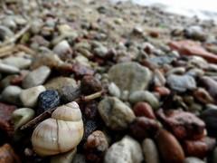 A stone beach (Aga Dzicio) Tags: beach stones stone shell lake bythelake wicajty mazury pebbles twig twiggy