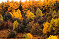 Herfst in Kootwijker bos 1 (antoonfotografie) Tags: herfst autumn landschap landscape nederland netherlands gelderland kootwijk bomen