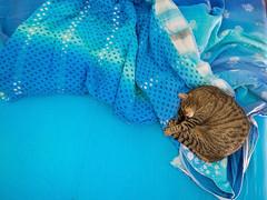 Bleu de Paris (Yuski) Tags: cat blue chat bleu azzurro gatto bed letto lit camera sonno