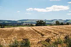 Tranent, Escocia (Jose Antonio Abad) Tags: alba escocia josantonioabad lanscape lodainn lothian naturaleza paisaje pblica reinounido scotland tranent unitedkingdom nature pencaitland