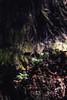 jmpark-064 (Yvonne Rathbone) Tags: 1855mmf3556gvr d5500 nikkor nikon bud forest growth leaf needle outdoors redwoods shade tree wood