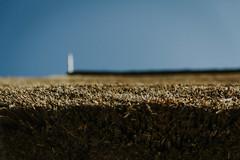 Till_Junker_20160914-_ILL4665 (scharfgestellt) Tags: reetdach reetdachdecker dachdecker handwerk stade reetdachdeckerjunker reetdachhaus junker stadehagen landkreis natur umwelt nature handmade