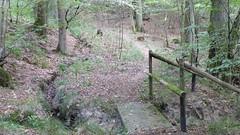 Wandern im Hunsrück bei Gräfenbacher Hütte