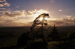 Setting silhouette (Sundornvic) Tags: tree silhouette light sun sunset shine clouds sky woods forest haughmondhill shropshire nature